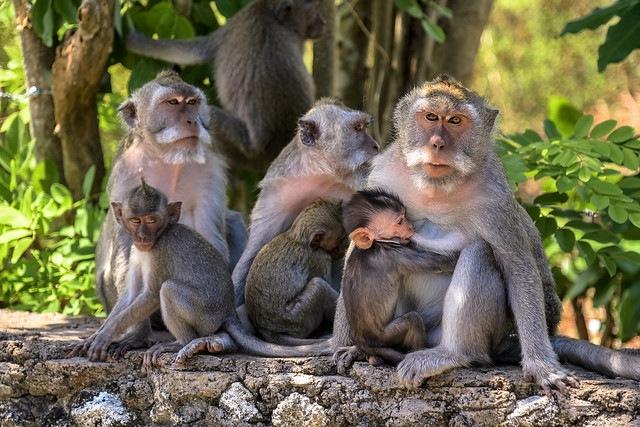 Uluwatu Monkey Forest in Bali