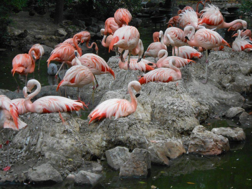 flamingos in denver zoo
