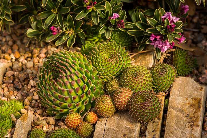 beautiful botanical gardens in denver