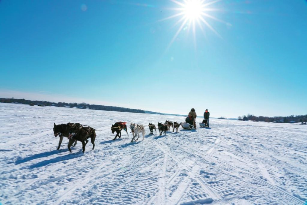Free Sled Dog Rides - Chilly Open