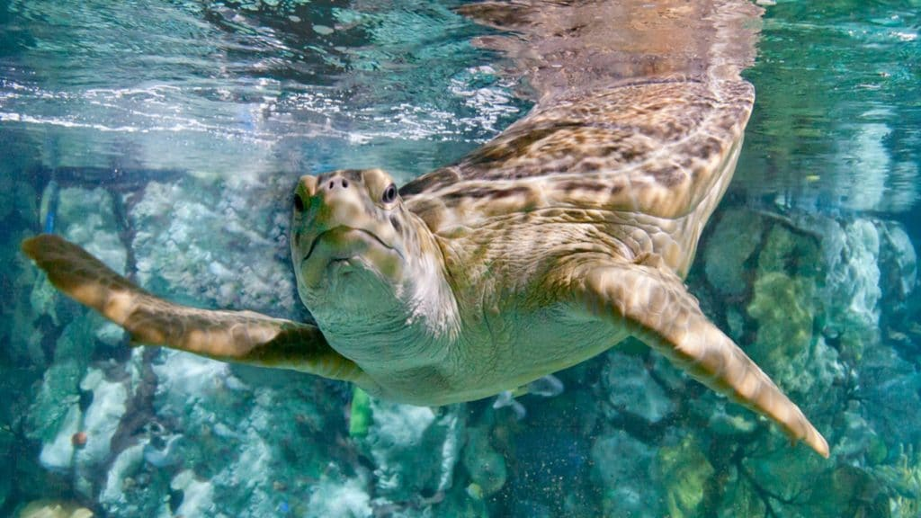 Chicago CityPASS gives you an opportunity to discover beautiful sea creatures of Shedd Aquarium