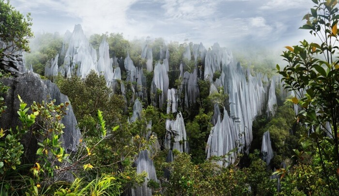 Borneo, Mulu Pinnacles (1)
