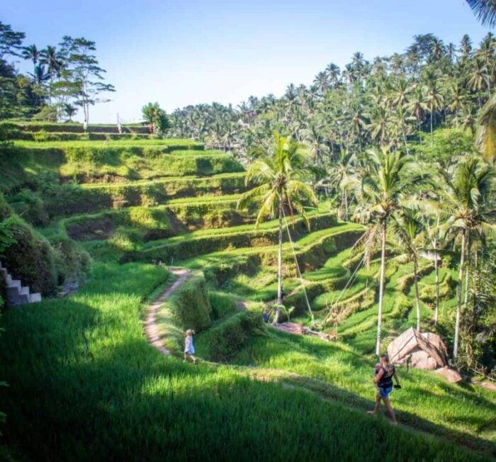 Bali, Indonesia Rice Fields