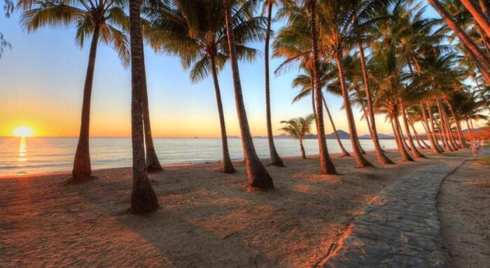 sunset on palm cove beach, sandy grownd wiht multiple spread out palm trees