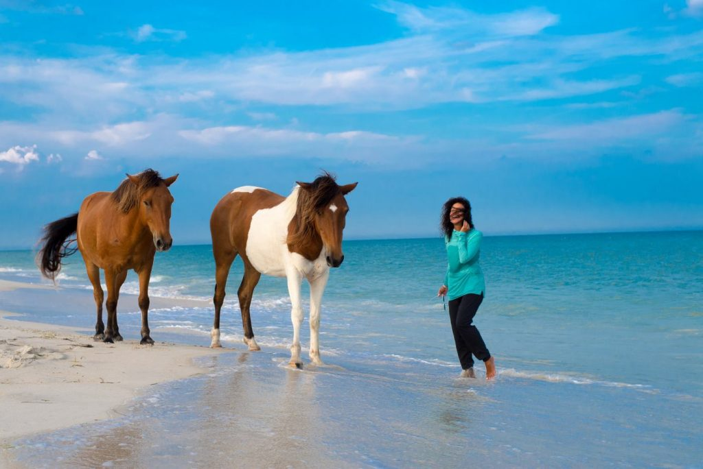 pretty beach with two ponies on the sand close to the coastline
