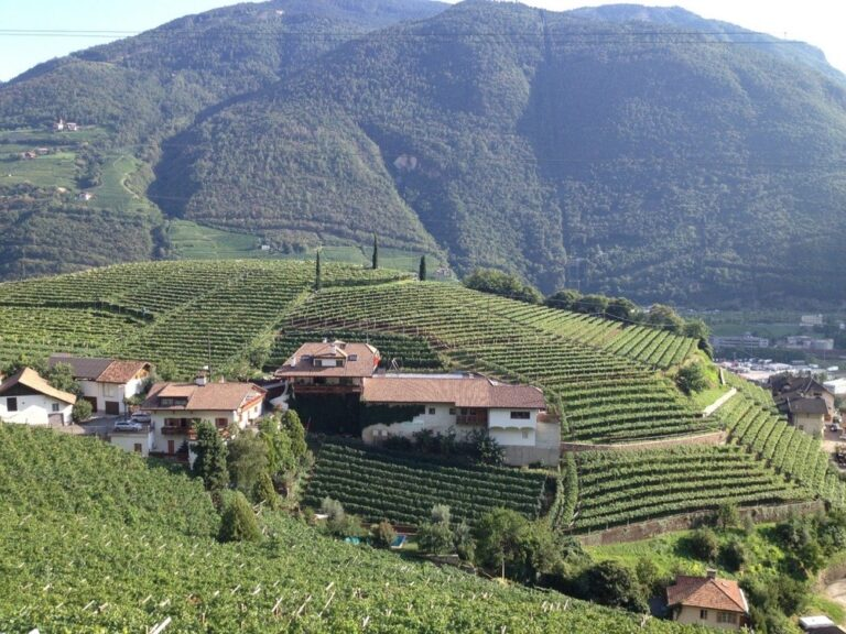 A vineyard typical in South Tyrol