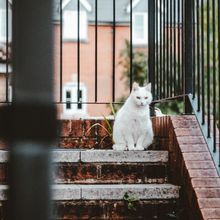 A cat sitting on door step