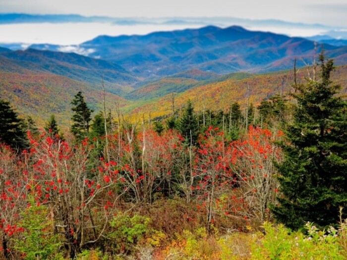 Fall foliage views from Clingman's Dome, Great Smoky Mountains National Park