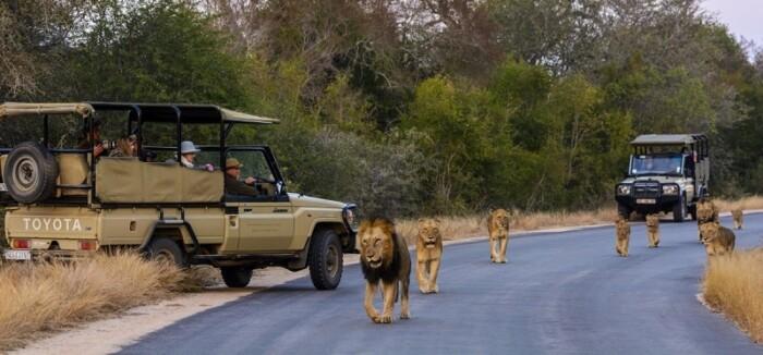 Kruger National Park lions