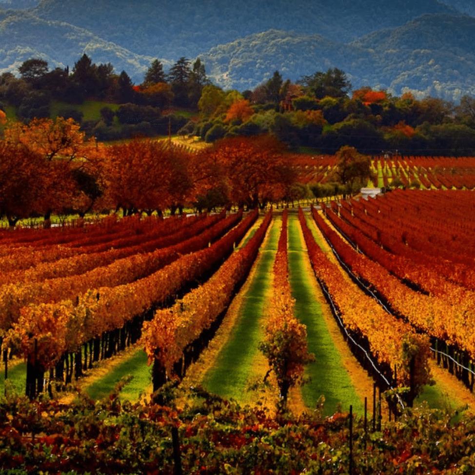Napa Valley and Sonoma Valley vineyards