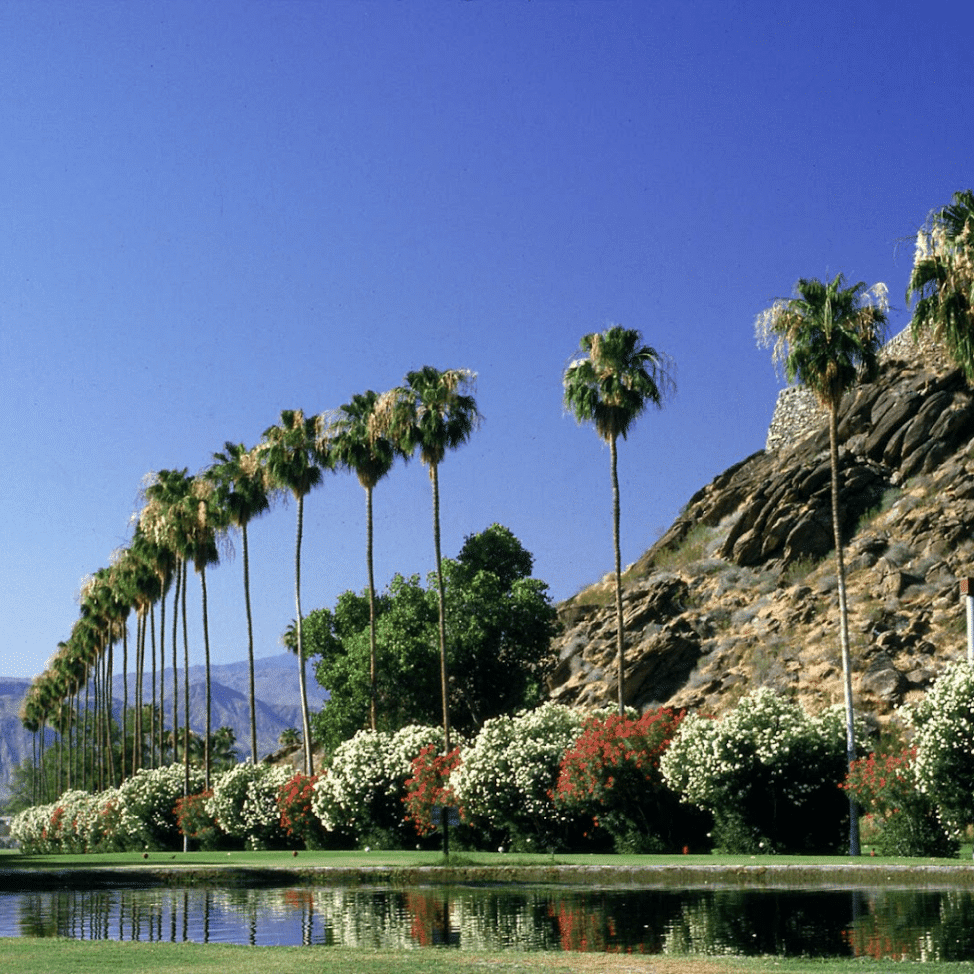 Palm trees that line the river