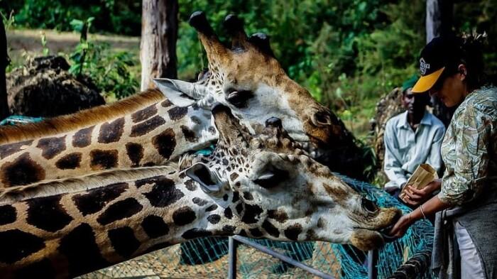 Visit ZooTampa