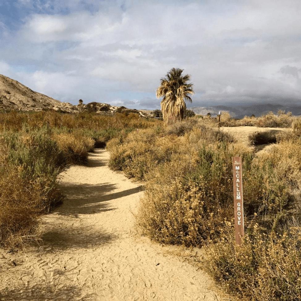 Coachella Valley desert with shrubs