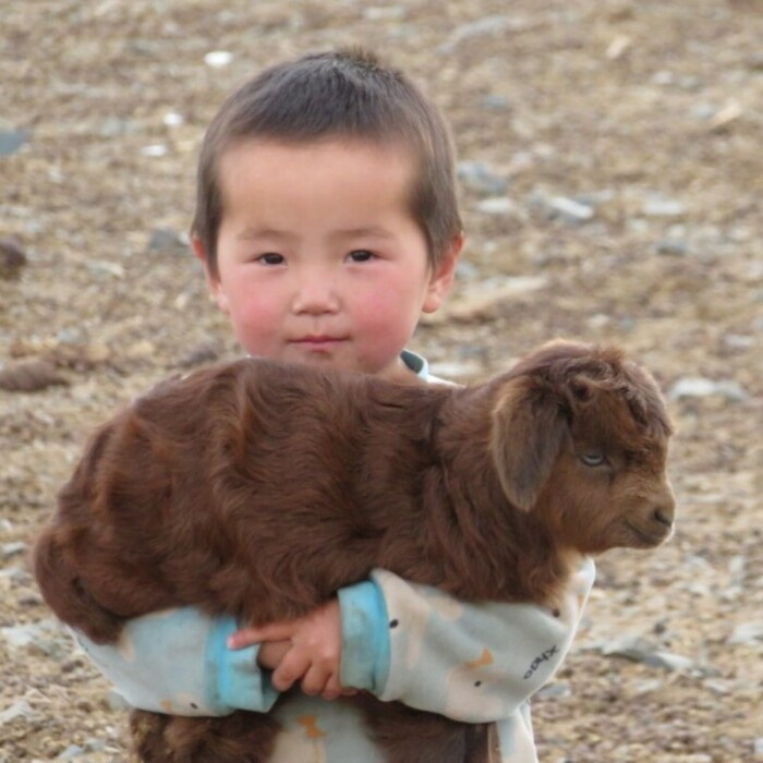 Cute Mongolian kid with a yak