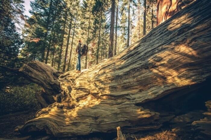 Sierra Mountains California