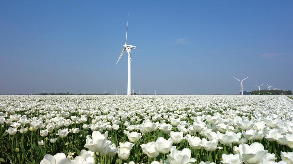 windmills on a tulip garden