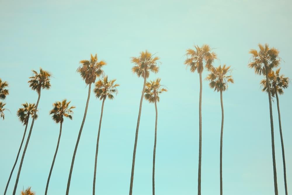 Trees in California art royalty free image