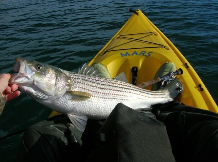 Lake Mead Fishing