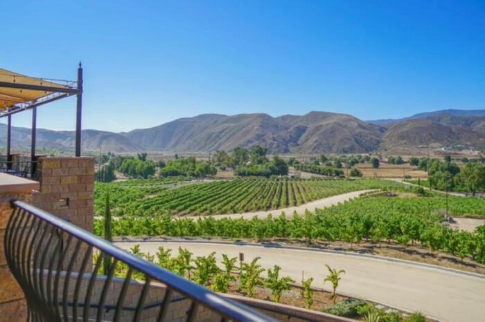 Vineyards Fazeli Winery