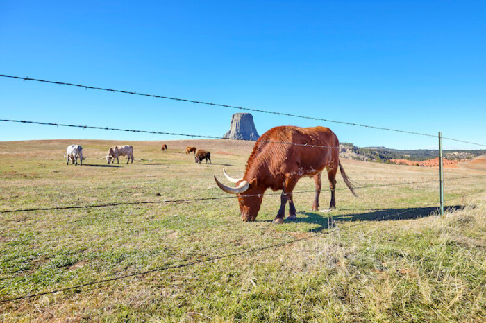 12 Best Wyoming Tourist Attractions | Things to See