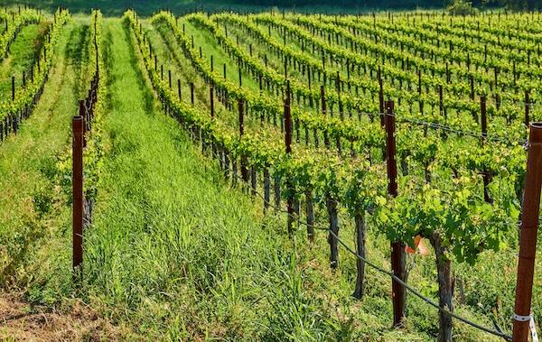 Sonoma California Vineyards