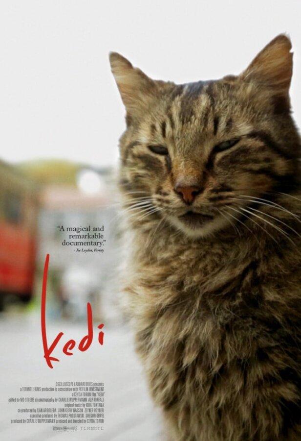 Kedi documentary