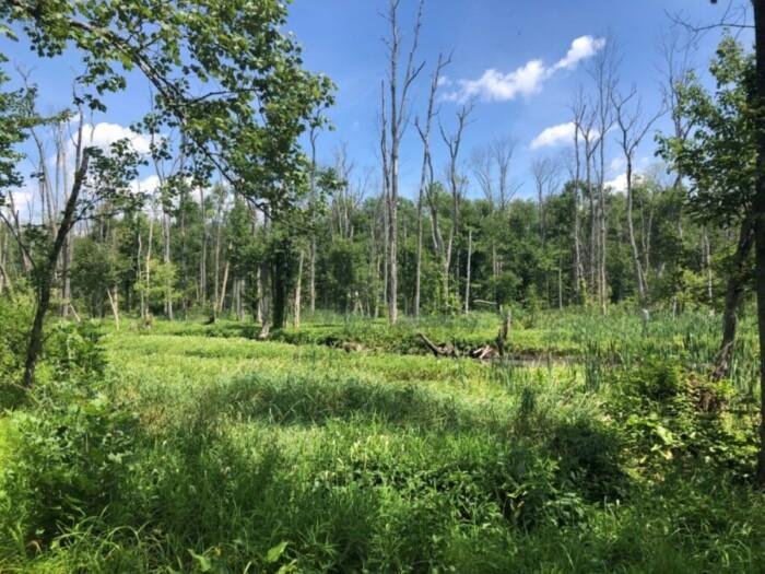 Patterson Environmental Park