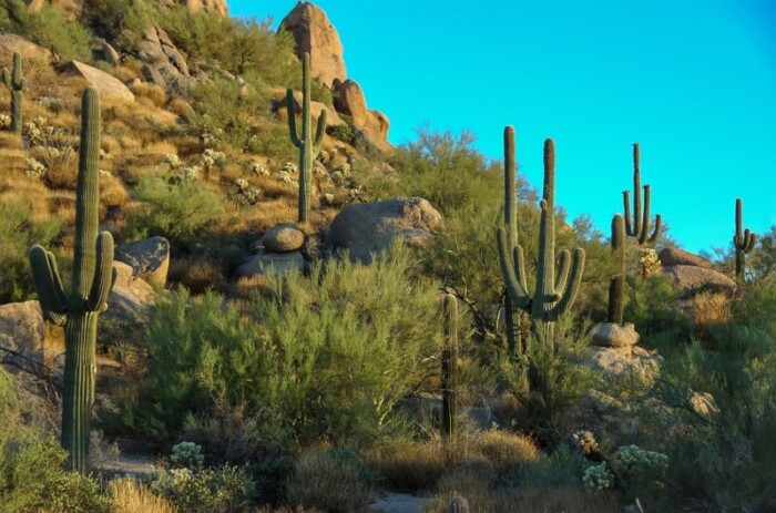 canyon with cacti