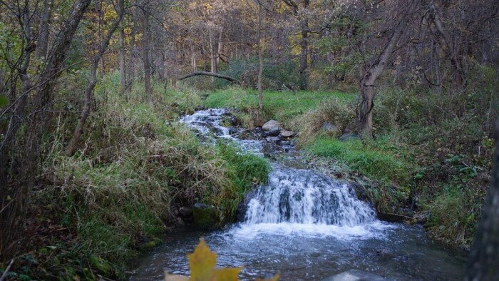 front view of a stream in the park with some foliage at the back, stream water at the front