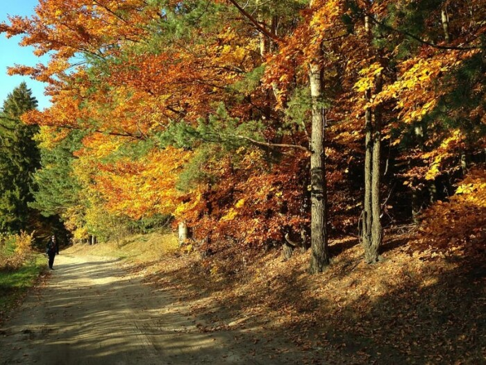 Duluth Fall Foliage
