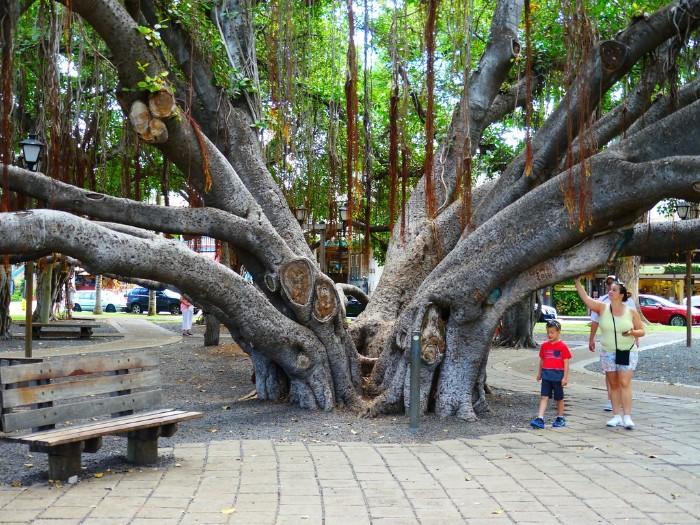 Banyan Court Park Lahaina Maui