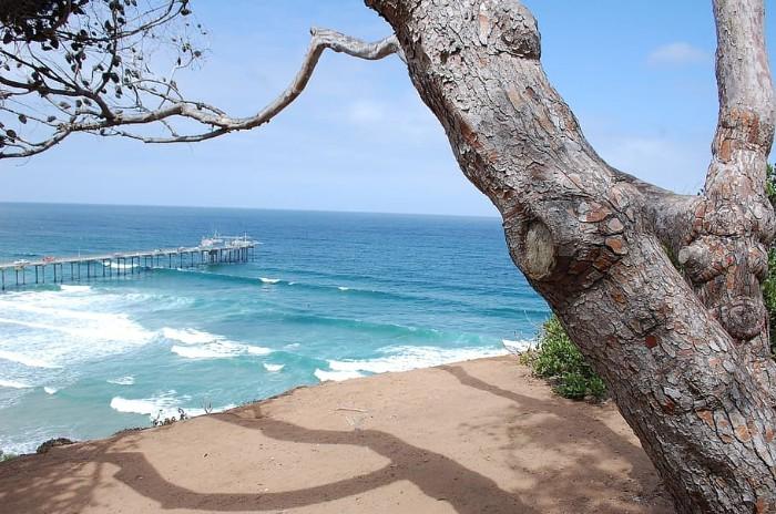 San Diego Beech