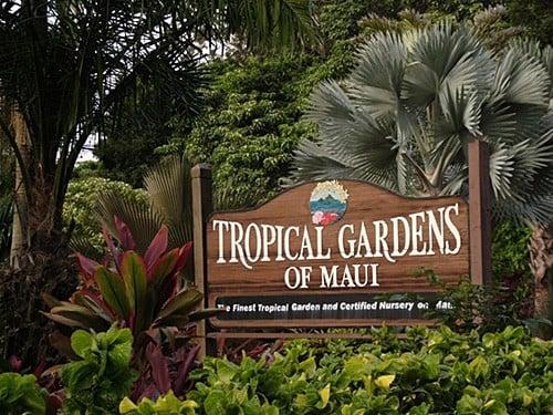 tropical gardens of maui